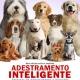 ADESTRAMENTO INTELIGENTE: com Amor, Humor e Bom Senso, de Alexandre Rossi